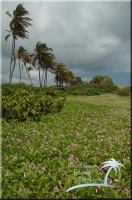 St. Vincent & the Grenadines Island for sale