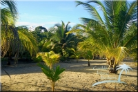 Caribbean Resort for sale