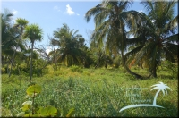 the best island land in Belize