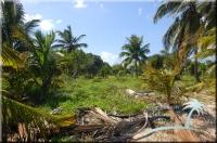 wild in Belize
