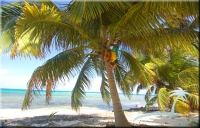 climb your own coconut tree
