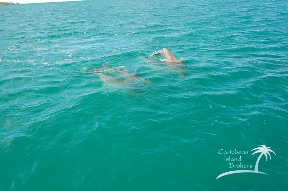 Belize has an incredible amount of Dolphins