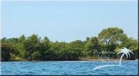 Northern shore of Cross Caye