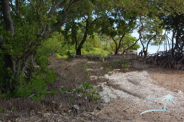 South shore of Cross Caye