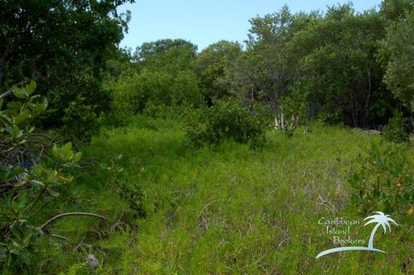 Vegetation has grown back on Cross Caye
