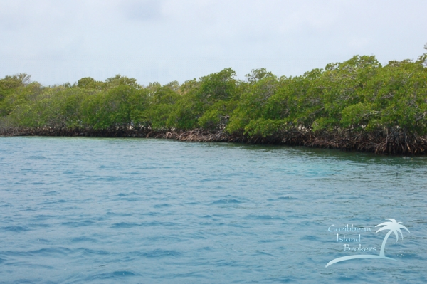 Eastern side of Sunset Caye